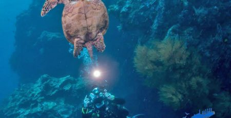 PADI Specialty Courses at Seaventures Dive Rig - Underwater Photography