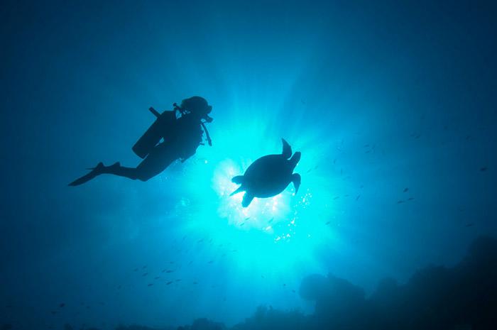 Sipadan island best diving in malaysia - Sipadan dive sites ...