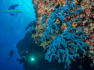padi-self-reliant-diver-course-seaventures-sipadan