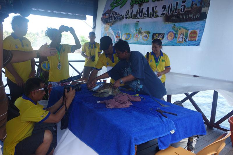 Measuring and Tagging - Mabul Turtle Week - Seaventures Dive Rig - Sipadan