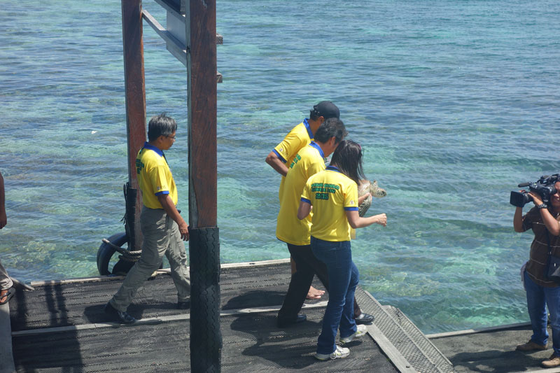 Releasing the turtles at Mabul Turtle Week - Sipadan, Malaysia