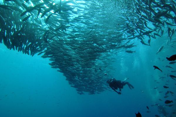 Scuba Diving Sipadan Malaysia
