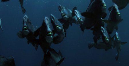 Bumphead parrotfish Sipadan Scuba Diving with Seaventures Dive Rig Facebook
