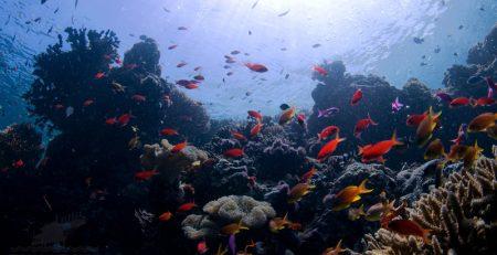 colourful-coral-reefs-sipadan