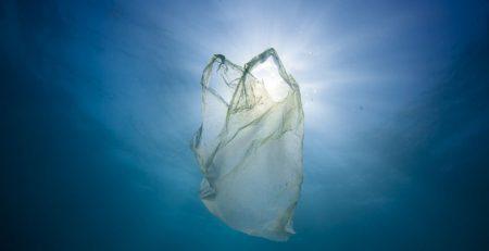 PLASTIC BAG, TURTLE ASSASSIN