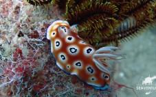 Scuba Diving Mabul Paradise 2