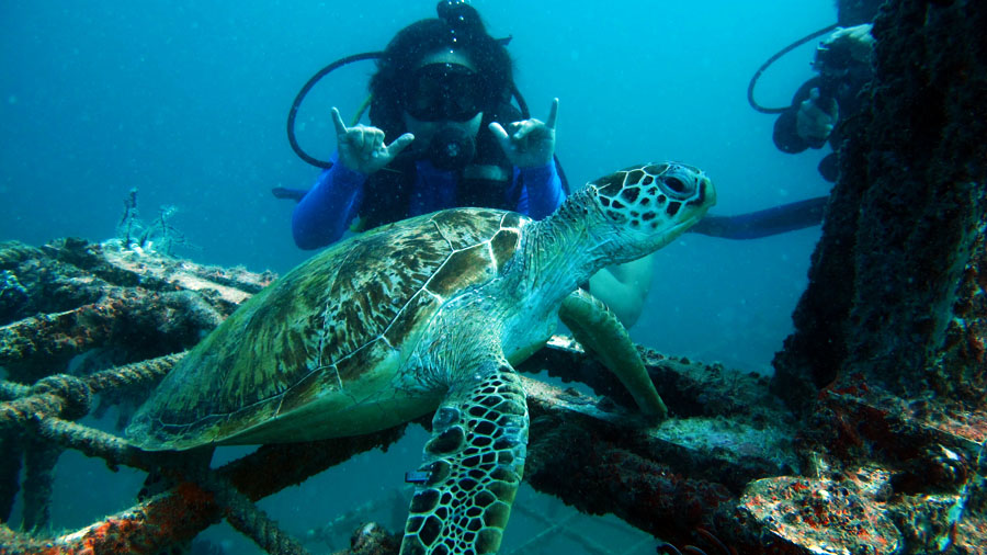 Rig Diver with Resident Turtle on Mabul Wreck