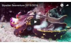 Featured Video: Sipadan Seaventure 2015/2016