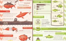 Seafood – Make the Right Choices!
