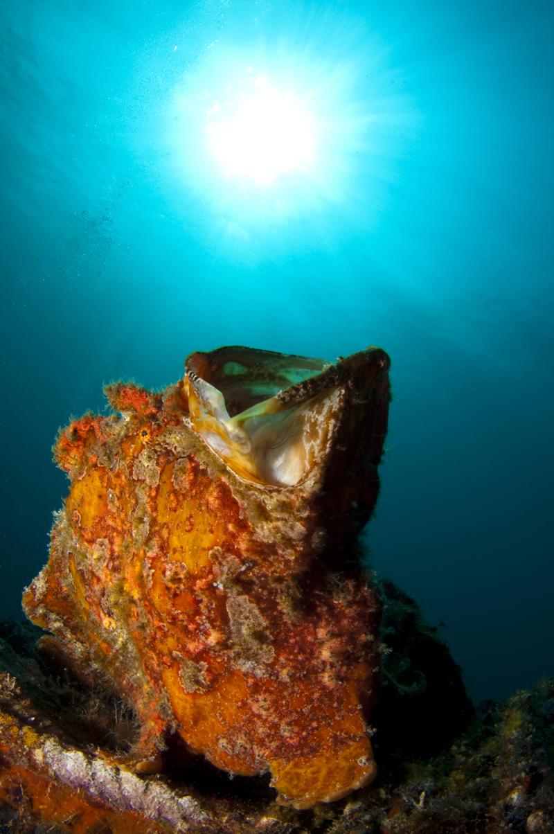 Mabul island best diving in malaysia - Sipadan dive sites ...